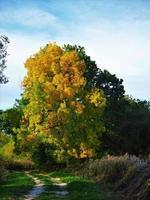 bokträd med vacker höstlövverk bredvid en lantfält foto