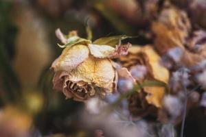 en bukett med torkade vissna blommor foto