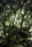 tropisk grön blad bakgrund, mörkt ton tema. foto