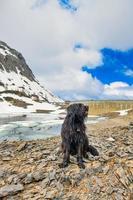 bergamasco herdehund i bergen nära en alpin damm foto