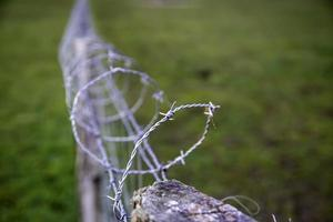 taggtrådsinvandring foto