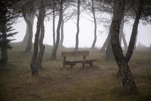 skog med dimma foto