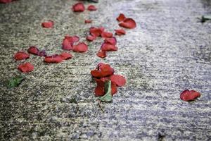 våta rosa kronblad foto