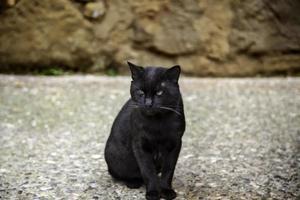 herrelösa katter i staden foto