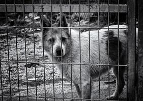 hund i kennel foto