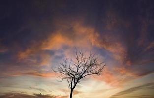 torrt träd i skogen foto