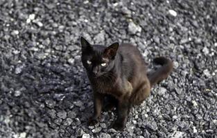 svart katt på gatan foto