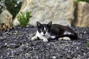 övergiven tillfällig katt foto