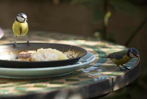 en mes i trädgården som vill äta foto