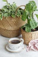 ficus benjamin i en halmkorg, maranta kerchoveana och en kopp kaffe foto
