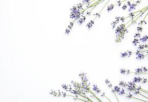 lavendelblommor på vit bakgrund. blommor platt låg, ovanifrån. foto