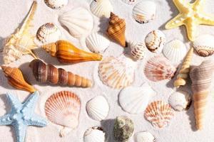 sommarbakgrund med snäckskal och conch skal på sanden foto