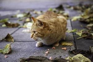 orange katt vilar gata foto