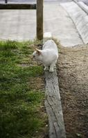 vit katt vilar gata foto