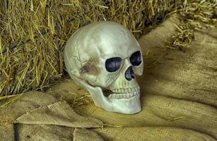 mänskligt skallehuvud foto
