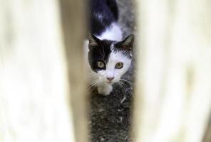 katt bakom trädörr foto