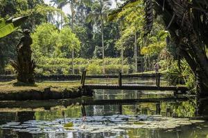 botanisk trädgård Rio de Janeiro foto