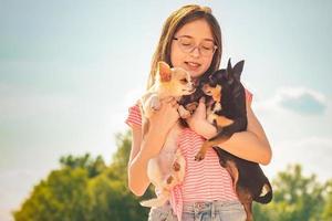 två hundar i armarna på en tonårsflicka. svartvit chihuahua. foto