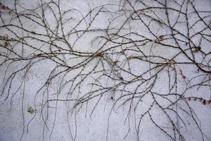 torra grenar på väggen foto