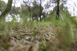 grönt gräs i skogen foto