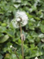 fält för nytt gräs foto