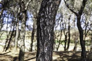 trädbark i skogen foto