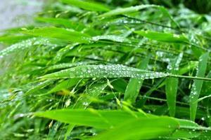 selektivt fokus. bild. närbild av färskt grönt bladverk med vattendroppar efter regn - bild foto