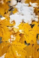 abstrakt fotografering. vit snö fallit på gula höstlöv. foto