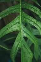 gröna blad textur bakgrund med regn vattendroppar foto