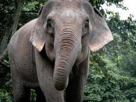 elefant i naturparken. vilda djur och växter foto