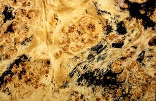 natur burl trä foto