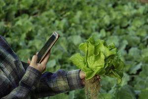 ung jordbrukare tar foto någon tillväxtgrönsak arkiverad i mobiltelefon