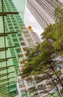regn och storm över träd växter skyskrapor i bangkok thailand. foto