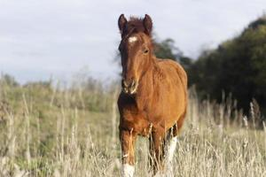 den vackra hästen äter utomhus foto