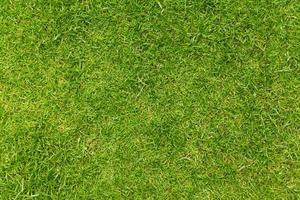grönt gräs textur bakgrund foto