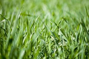 fält av grönt gräs foto
