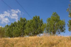 grupp av träd på en blå himmel bakgrund foto