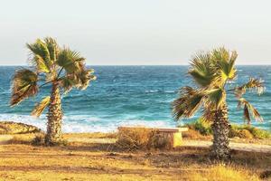 solig medelhavskust med palmer. sommartid foto