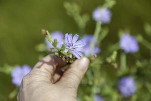 lila blomma i fältet foto