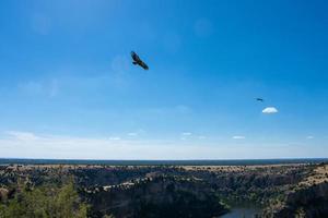 griffon gamar flyger över floden foto
