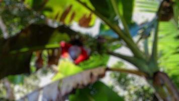suddig foto av färska bananträd och frukter på klar himmel bakgrund