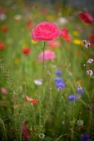 vackra vårblommor i trädgården foto
