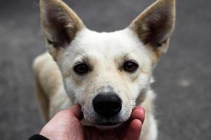 vacker hemlös hund ser ut och ber om hjälp. foto