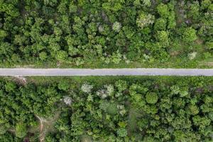 landskap av rak asfaltväg i tropisk regnskog foto
