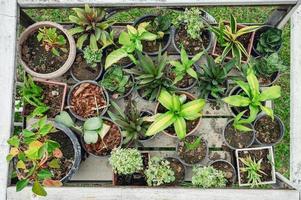 olika växtgröna blad som växer i kruka på trävagn foto
