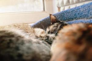 två söta katter som sover i husdjurs soffa nära fönster. foto