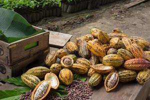 rå kakaobönor och kakaopåsen på en träyta foto