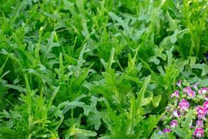 färska salladsblad, sallader grönsaker hydroponics gård foto