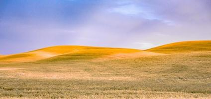 böljande kullar och jordbruksmark vid palouse washington foto