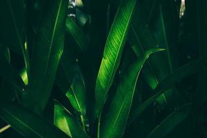 naturen lämnar grön bakgrund i trädgården på våren. mörk tropisk lövverk naturlig bakgrund. foto